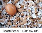 Eggs On Cracked Egg Shells
