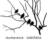 vector silhouette starling on branch tree - stock vector
