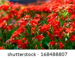 red flower | Shutterstock . vector #168488807