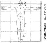 the proportions of the human... | Shutterstock .eps vector #1685447971