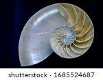 Nautilus Pompilius Shell...