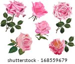 illustration with set of rose... | Shutterstock . vector #168559679
