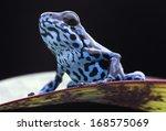 blue strawberry poison dart... | Shutterstock . vector #168575069