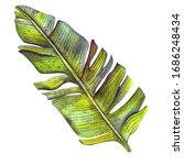 beautiful hand drawn botanical... | Shutterstock . vector #1686248434