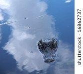 everglade scencis in florida ... | Shutterstock . vector #16862737