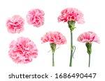 Cutout Photo Of Pink Carnation...