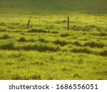 Fenced Meadow With Grass Rows...