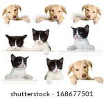 Stock photo puppy and kitten set 168677501
