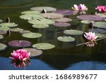 Pond With Lily Pads And Flowers