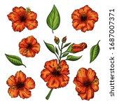 hibiscus flowers set with... | Shutterstock .eps vector #1687007371
