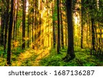 Forest trees sunrise rays. Forest in morning sunrise rays shadows. Sunrise in morning forest - stock photo