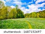 Summer Forest Meadow Landscape. ...