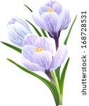 flowers crocuses  not auto... | Shutterstock .eps vector #168728531
