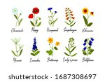 set of wild field flowers with... | Shutterstock .eps vector #1687308697