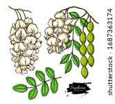 sophora japonica vector drawing.... | Shutterstock .eps vector #1687363174