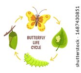Butterfly Life Cycle. Insect...