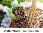 Mulching Flowerbed With Pine...