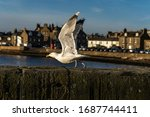 Seagull With Wings Ready To...