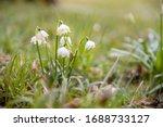 Beautiful Blooming Of White...