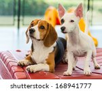 Stock photo let s play together we are happy dog 168941777