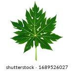 Papaya Leaf  Green Papaya Leaf...