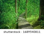 Photo Of Wooden Path In A Forest