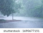 Heavy rain and tree in the...