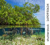 Mangrove With Tropical Fish ...
