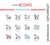 dog breeds   modern line design ...   Shutterstock .eps vector #1691348167