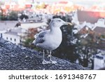 A Seagull Stands On A Stone...