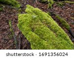 High angle view of moss-covered branches at Point Defiance Park in Tacoma, Washington