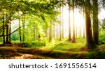 Beautiful Forest In Spring With ...