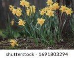 Photo Of Yellow Flowers...