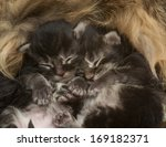 Two Newborn Kittens Sleeping...