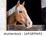 Beautiful Chestnut Horse...