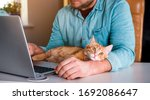 working at home with pet laying ...   Shutterstock . vector #1692086647