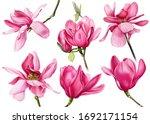 Set Of Pink Flowers  Magnolia...