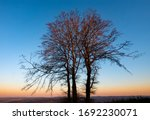 Small photo of Family group of free standing beech trees at colorful sunset on a spring evening near Neuenrade and Altena Sauerland Germany with sky color gradient and great ramification