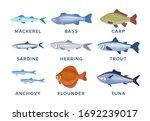 fish set vector illustration...   Shutterstock .eps vector #1692239017
