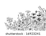floral meadow   monochrome hand ... | Shutterstock . vector #16923241