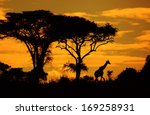 Savanna's Silhouettes With...