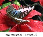 Butterfly Ll