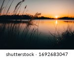Reed Silhouettes Landscape Lake ...