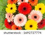 Gerbera Flowers Bouquet. Floral ...
