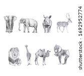Set Of Animal Drawings Isolated ...