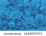 The Blue Flower. The Blue...
