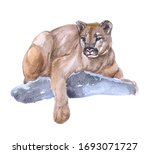 Watercolor Cougar  Animal On A...