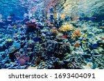 colorful tropical beautiful... | Shutterstock . vector #1693404091