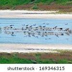 flock of seagulls reflected in... | Shutterstock . vector #169346315