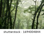 The Jungle Of Costa Rica In...